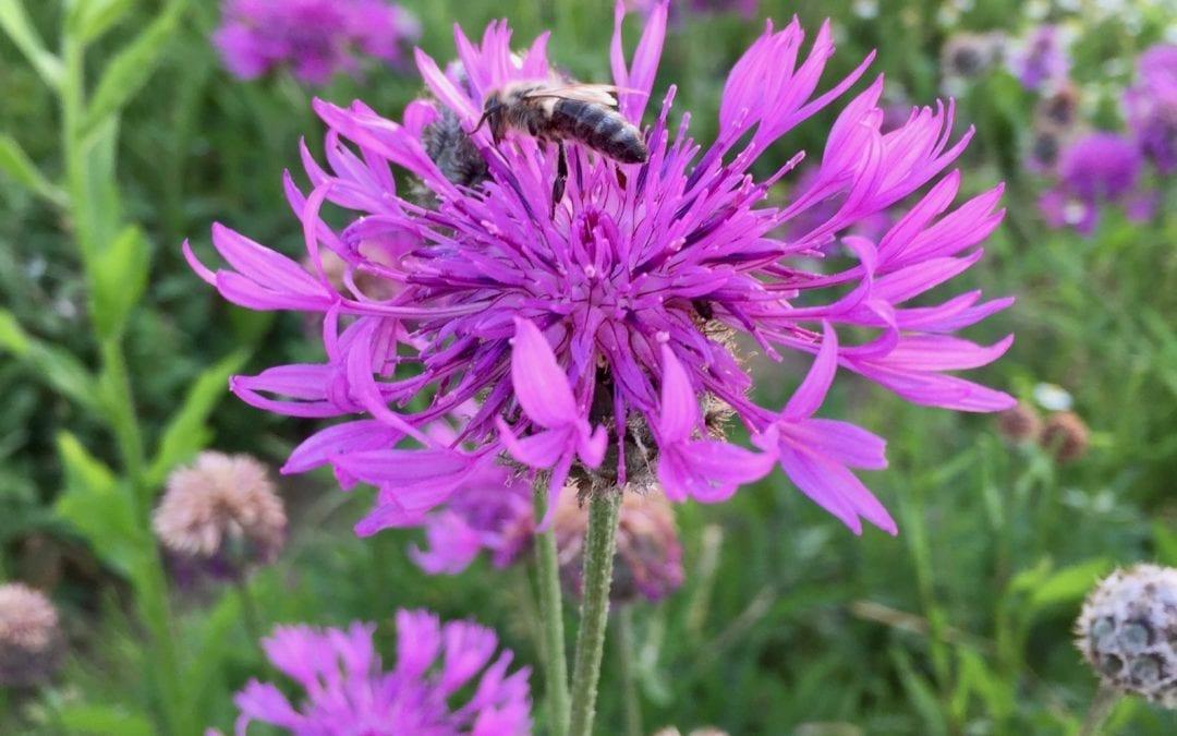 Landwirtschaft und Bienen – eine Symbiose – Exkursion 2