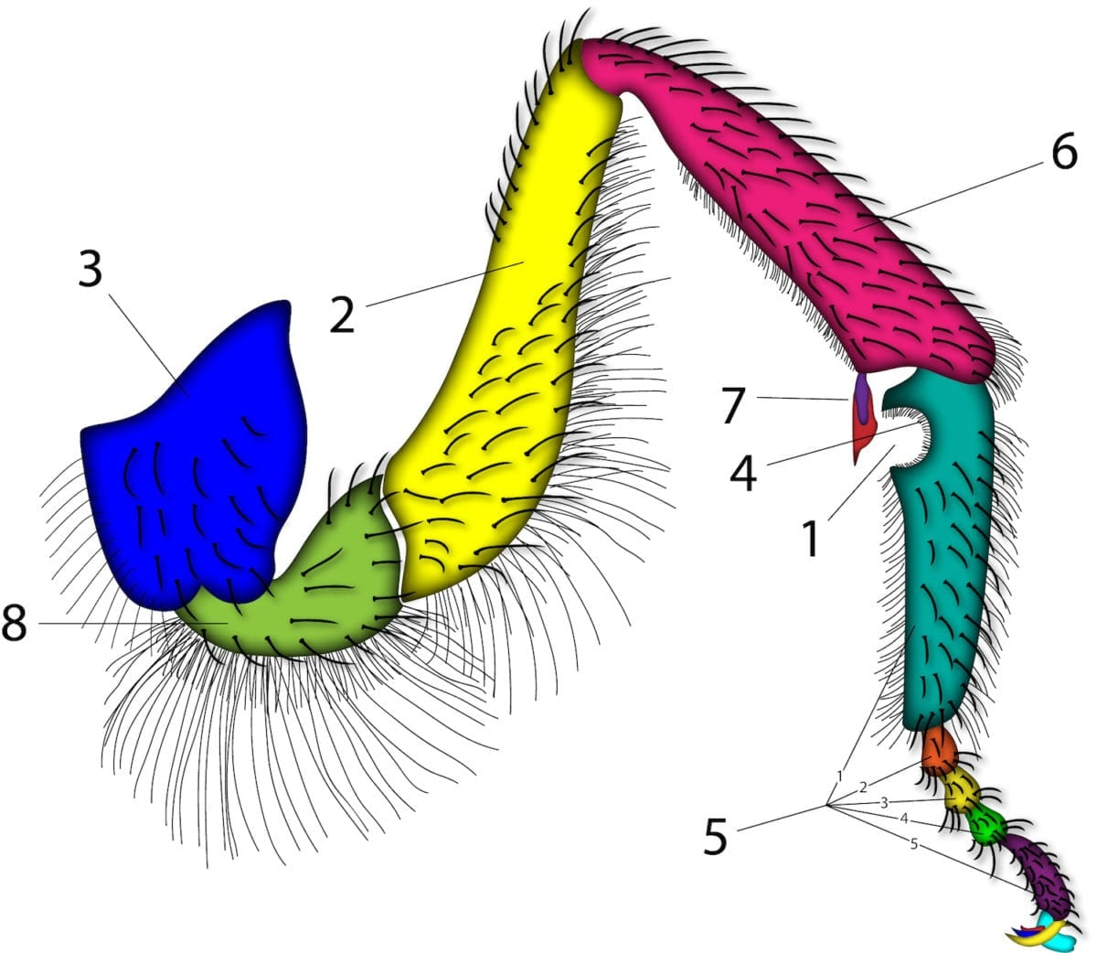 Anatomie - Imkerverein Stierberg