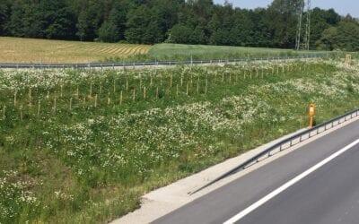 """Gelungene Anlage von Straßenbegleit""""grün"""""""